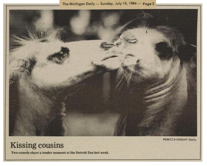KISSING COUSINS, Michigan Daily, 15 July 1984